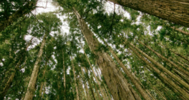 4 Different ways to use trees for survival situations